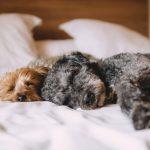 Jaki śpiworek dla psa warto wybrać? Porady