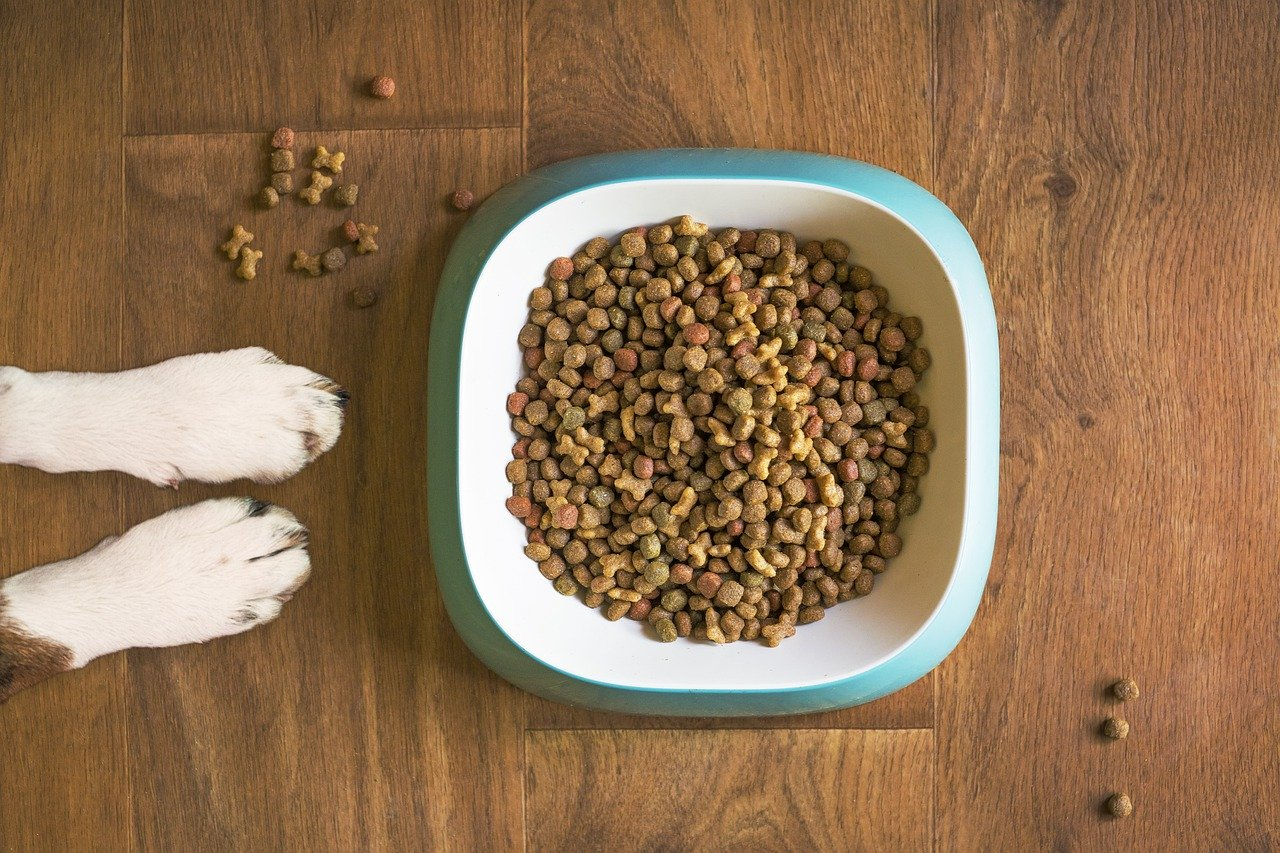 Miski dla psów-jakie wybrać?