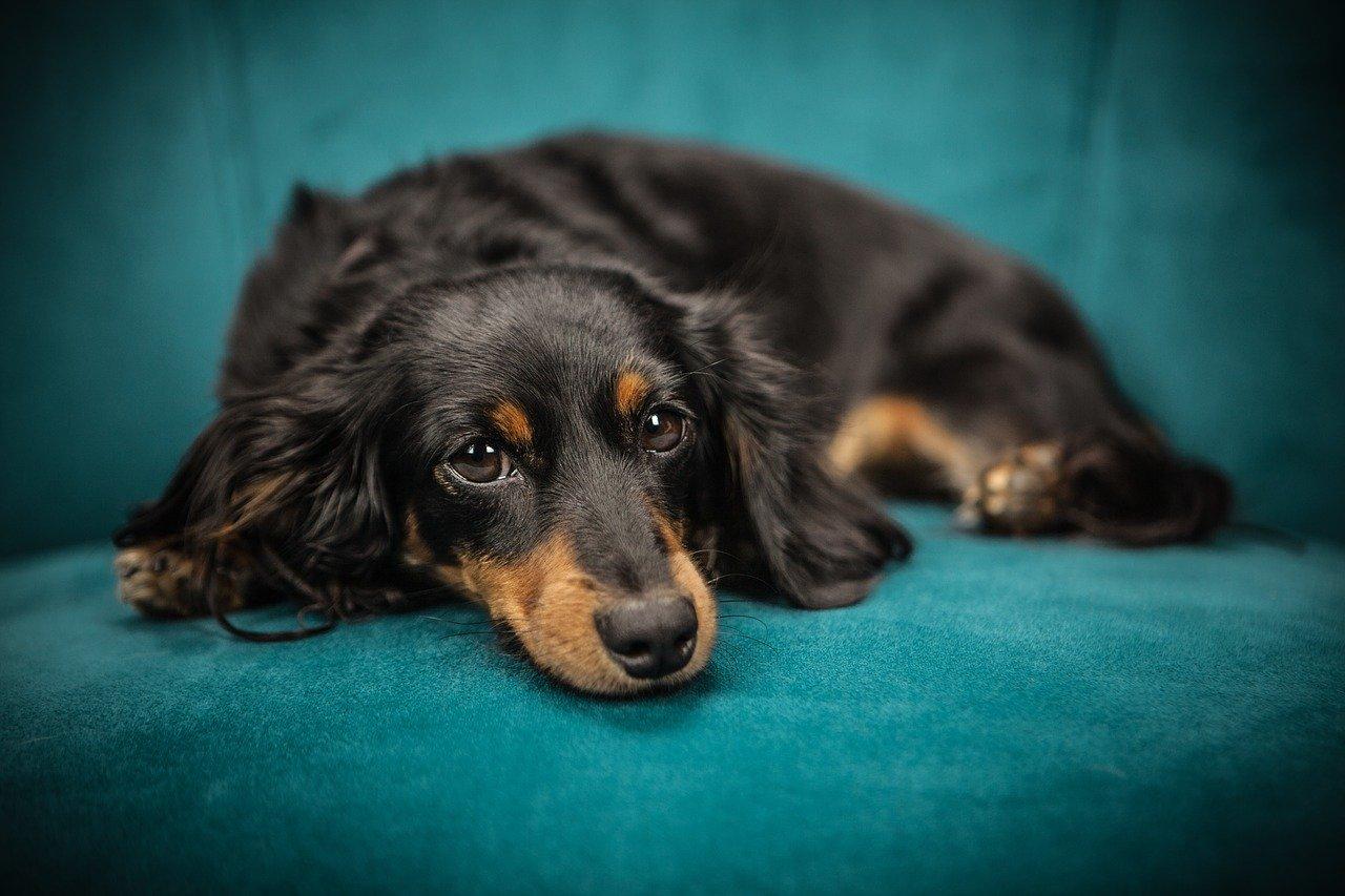 Jakie legowiska dla psów warto wybrać?